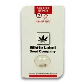 tri konopné semená Snow Ryder, Automaticky kvitnúce, White Label