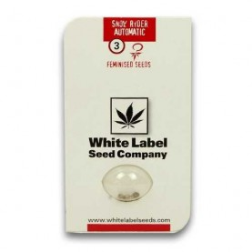 package of three cannabis seeds Snow ryder, autoflowering, feminised, White label