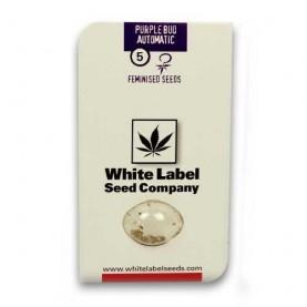 package of five seeds of autoflowering cannabis strain Purple Bud