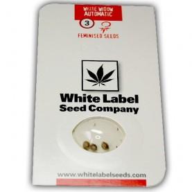 tri semená automaticky kvitnúceho konope White Widow