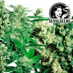 FEMINIZED MIX (10 SEMIENOK)...