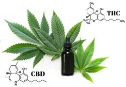CBD olej - účinná doplnková terapia pre nádorové ochorenia