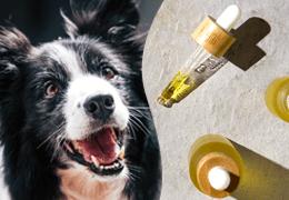 CBD olej ako prírodné liečivo pre psov